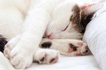 Mooie, witte slapende kat van Miranda van Hulst
