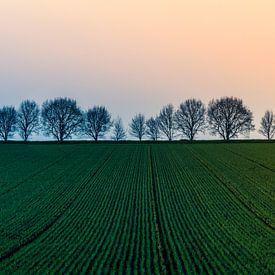 Landschap met jong graan van Marianne Twijnstra-Gerrits