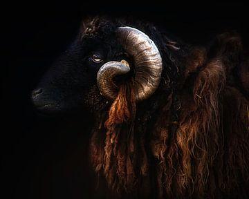 Ram Portrait, Santiago Pascual Buye von 1x