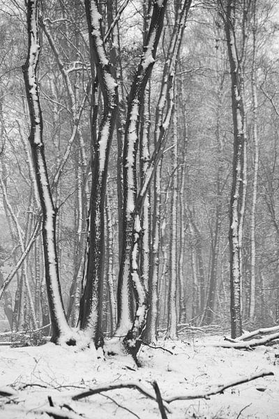 contrast van hanny bosveld