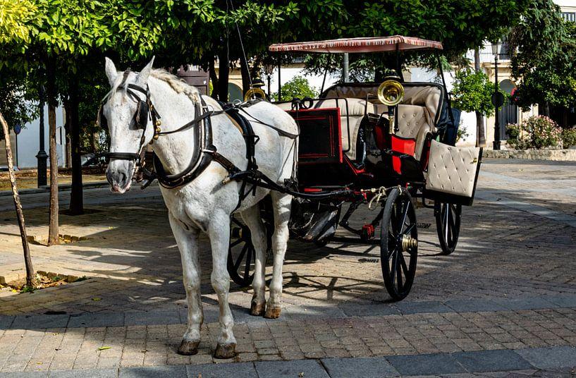 Paard en koets in Jerez de la Frontera van Hans Verhulst