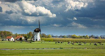 Mühle De Marsch, Lienden, Niederlande von Adelheid Smitt