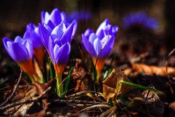 Concept flora : Purple love von Michael Nägele