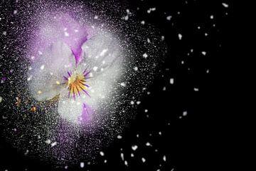 Blüten-Zauber mit schwarzem Hintergrund sur Ursula Di Chito
