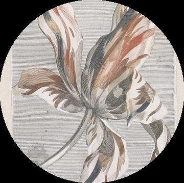 Romantische tulp
