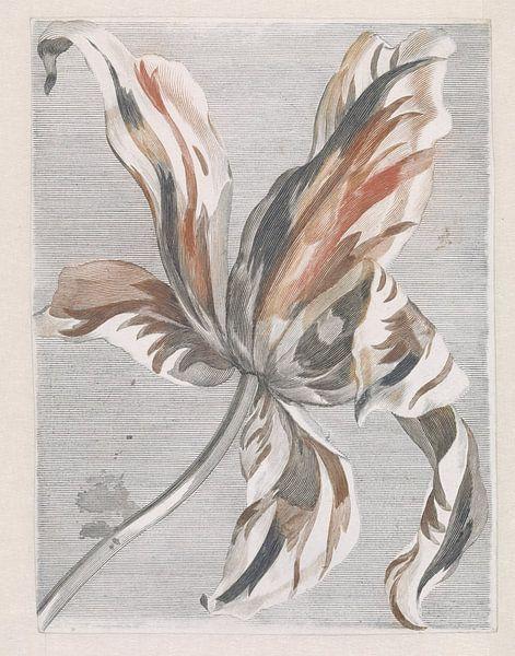 Romantische tulp van Vintage en botanische Prenten
