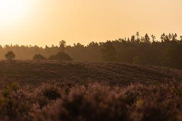 goldenes Moor von Tania Perneel