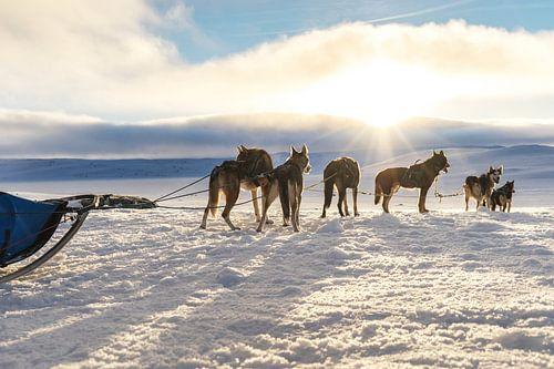 husky safari tocht Noorwegen von Jacqueline Regtuit