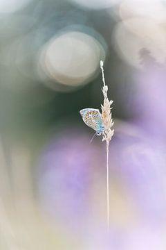 Butterfly softness van Bob Daalder