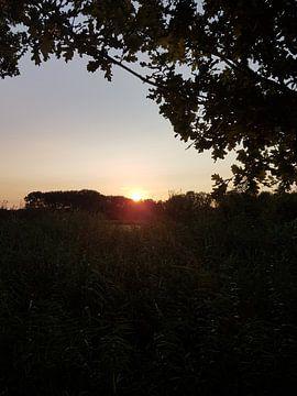 ondergaande zon van Joelle van Buren