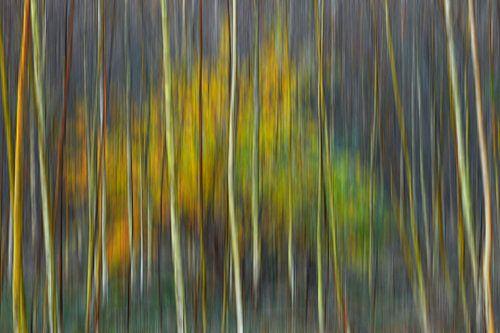 Bomen in beweging in de herfst