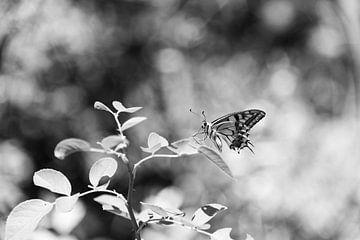 Schmetterling in schwarz und weiß von Chantal Koster