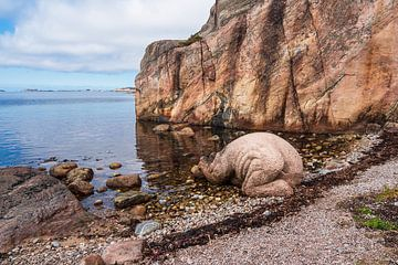 Rochers sur l'île archipel de Kapelløya en Norvège