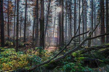 Herbstsonne in der Sächsischen Schweiz von Holger Spieker