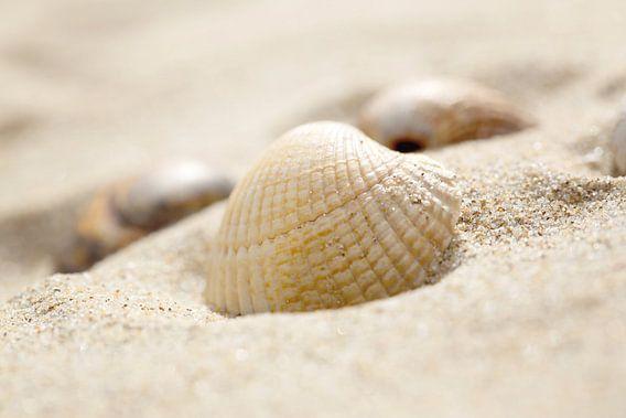 Schelpje in 't zand van LHJB Photography