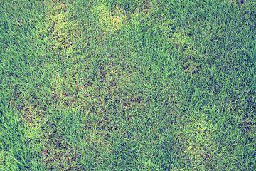 Rasen von BVpix