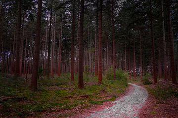 Het bospad von Catching Colors