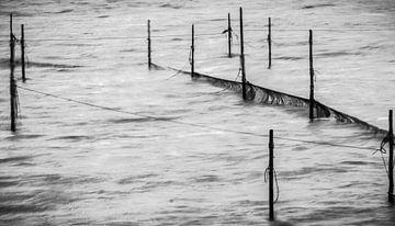 Visvangst op het IJsselmeer van Kees Rustenhoven