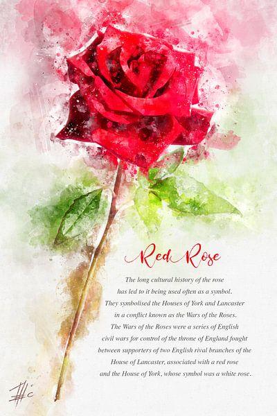 Rote Rose von Theodor Decker