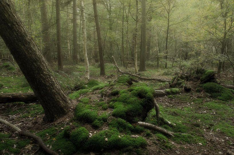 Verstild bos van Hannie Kassenaar