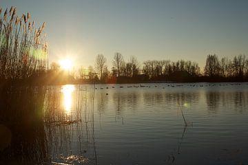 Winterse zonsopgang bij het meer van Maurice Welling