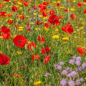 Een veld vol met bloeiende wilde bloemen von John Kreukniet