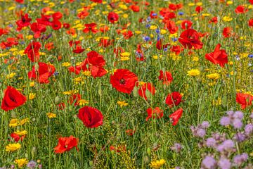 Een veld vol met bloeiende wilde bloemen van John Kreukniet