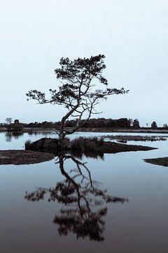 Strabrechtse Heide 290