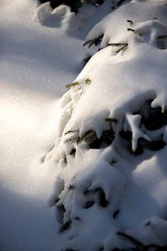 Verschneite Kiefern in einer ländlichen Naturkulisse | Fine Art Photo Print | Poster von Karijn Seldam