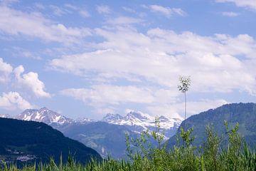 Alpen sur Miranda van Hulst