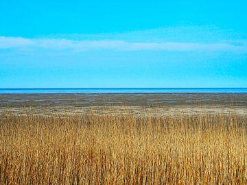 De Waddenzee bij Zwarte Haan op een heerlijke zonnige dag van Helene Ketzer