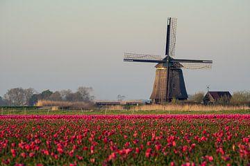 Tulpen en een molen van Erik Graumans