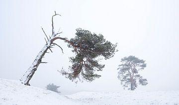vliegdennen in besneeuwd landschap in de winter bij zeist van anton havelaar