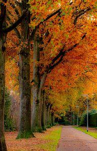 Kleurige herfst van Agnes Schuiterd