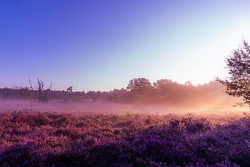 Nebliger Morgen in der Heide bei Vasse von Cees de Vreugd