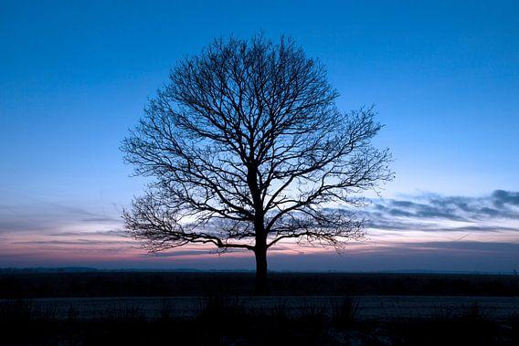 Eenzame boom van Ronald Jansen