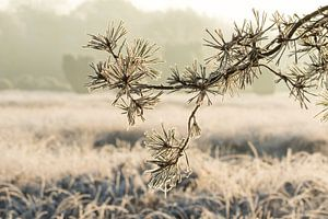 Bevroren den  in Winterlandschap