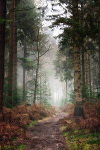 Pad door de bossen van de Lage Vuursche van