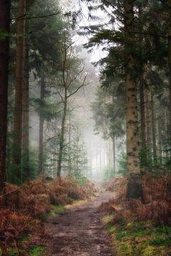 """Pfad durch die Wälder der """"Lage Vuursche"""" von Pascal Raymond Dorland"""