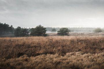 Licht, mist en natuurschoon | De Veluwse heide van Nanda van der Eijk