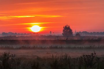 Ganzen in het veld tijdens zonsopkomst van Stephan Neven