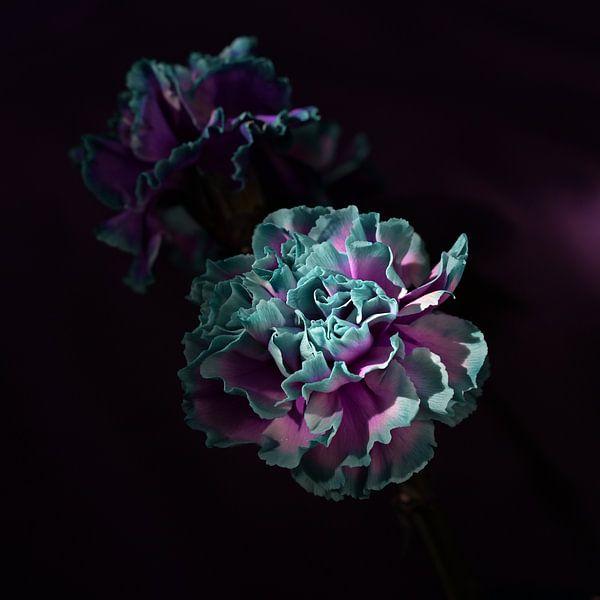 'Carnations' van Roelina Holtrop
