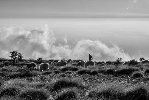 Schaapherder in de bergen boven de wolken