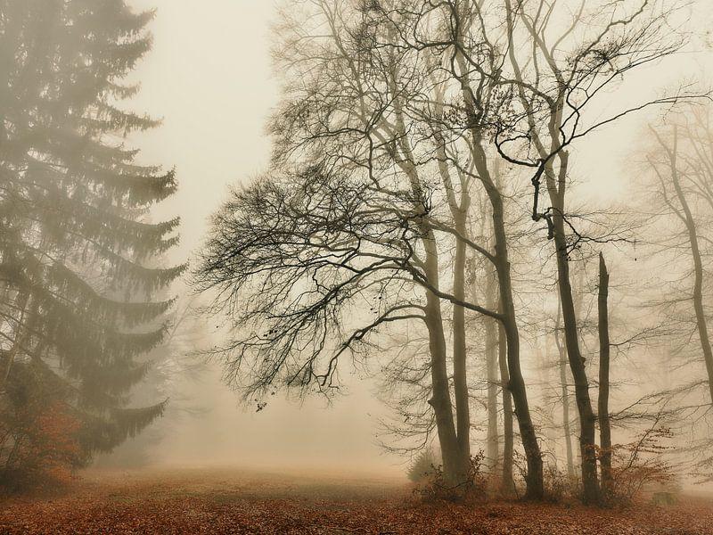 Dezembermorgen von Max Schiefele