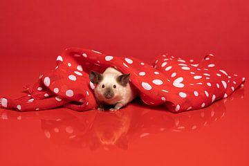 Niedliche kleine siamesische Maus, die sich unter einem rot-weiss gepunkteten Schal versteckt von Leoniek van der Vliet