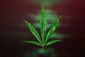 Cannabis van Tilo Grellmann | Photography