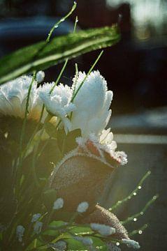 Vintage Blume von Michel Kruiswijk