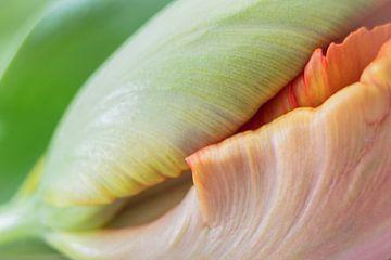 Blütenblätter von Karin Tebes