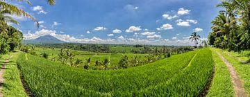 Rijstveld op Bali, Indonesie van Stefan van der Wijst