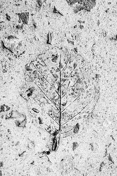 Schwarz-weißes Blattgerippe 1 von Ellis Peeters